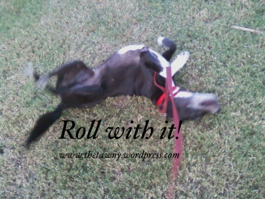 Roll With It!