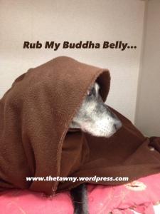 buddha dog