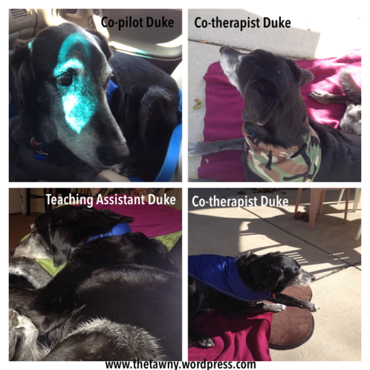 Duke new roles collage
