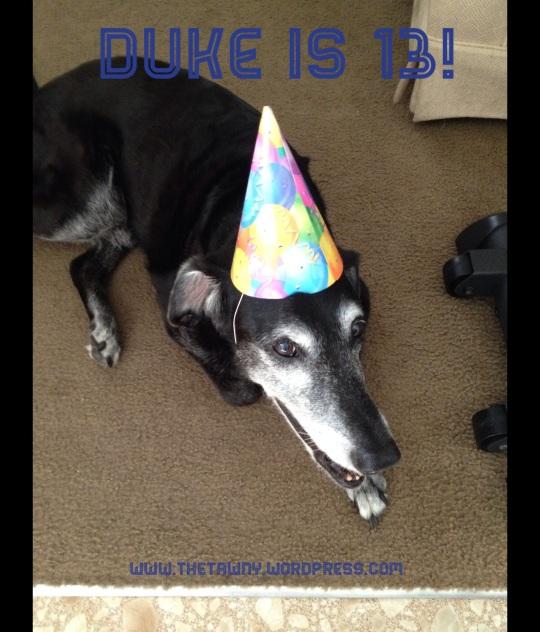13th Birthday Duke
