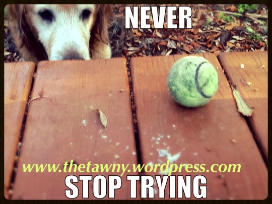 never stop trying