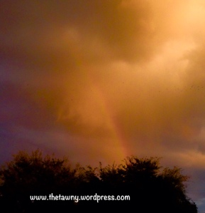 rainbow 11-4-15